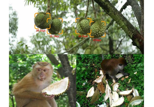 iot ai object detection durian monkey alert
